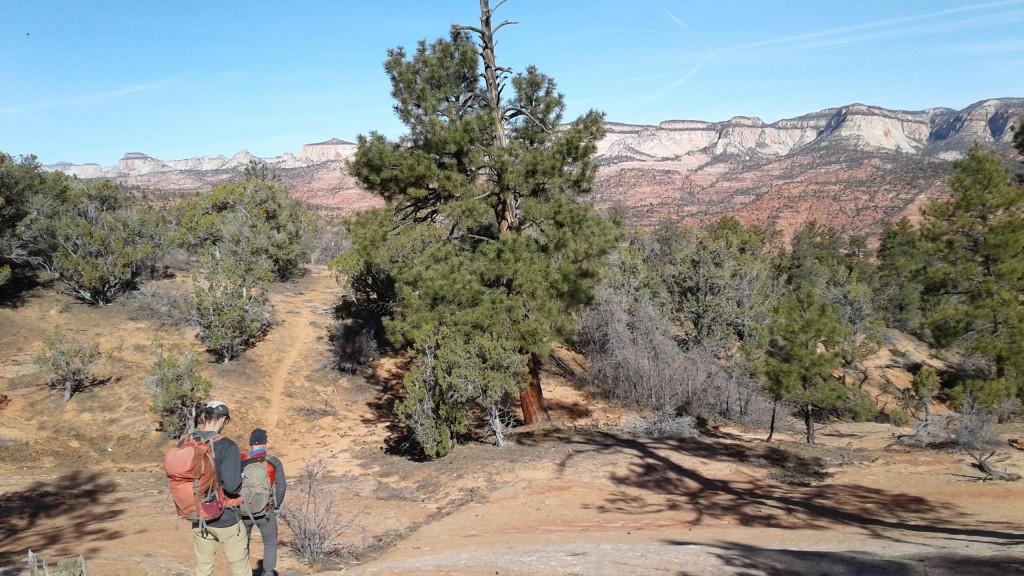 wilderness near Zion