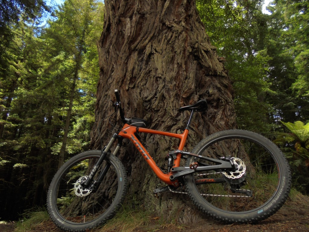 bike tree stand