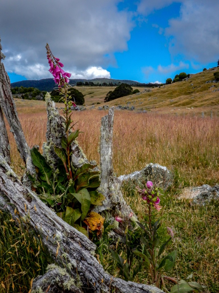 Flower New Zealand